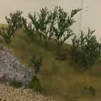 Sunshine Valley - Sträucher aus Schafgarbe